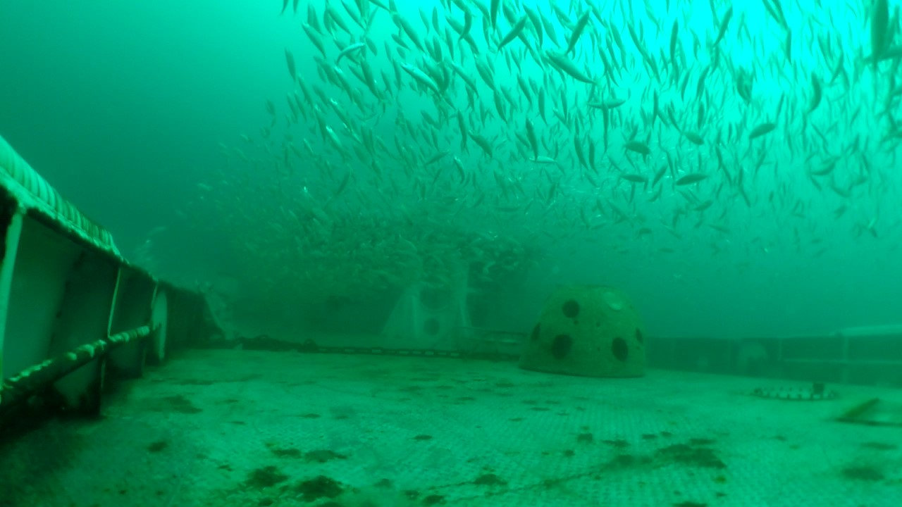 The nc artificial reef program and the new ar guide nc for Arkansas fishing license cost